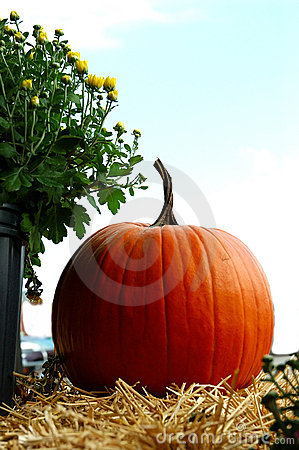 Free Fall Pumpkins Royalty Free Stock Photography - 250407