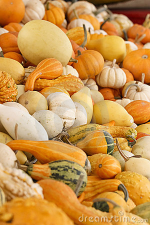 Free Fall Pumpkins And Gourds Royalty Free Stock Photography - 6565207