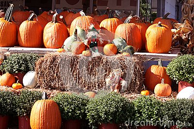 Fall pumpkins, hay and scarecrows