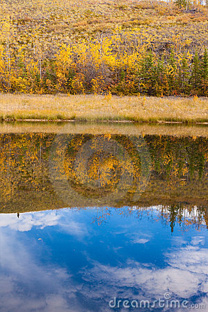 Fall reflections on water surface