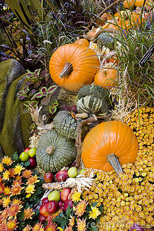 Fall season pumpkins at harvest