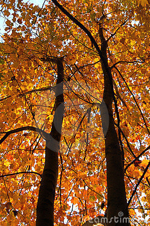 Free Fall Season Tree Stock Photos - 583653