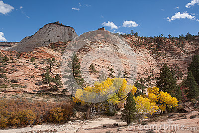 Fall Season at Zion