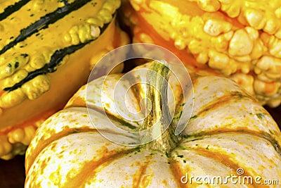 Fall Squash or Gourds in Closeup