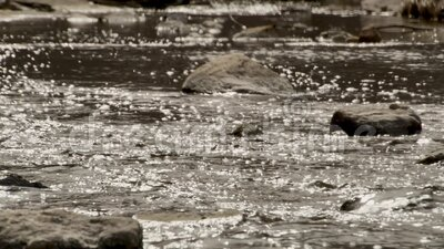 Fall Stream. Closeup of a stream in the fall stock video