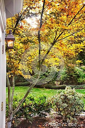 Fall sunlight suburban garden