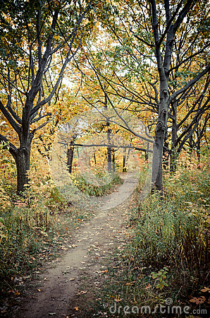Fall Trail