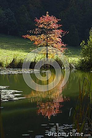 Free Fall Tree Stock Photos - 1490153
