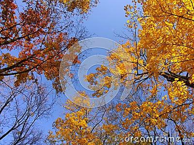 Fall tree crowns