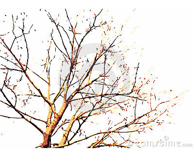 A scalable vector illustration Fall Tree Illustration