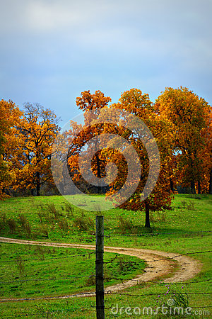 Free Fall Trees On A Hill Royalty Free Stock Photos - 45766508