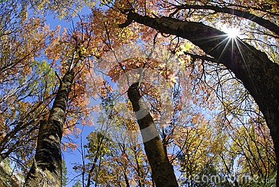 Fall Trees and Sunlight