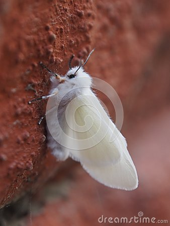 Free Fall Webworm - Common Garden Pest Stock Images - 104917814