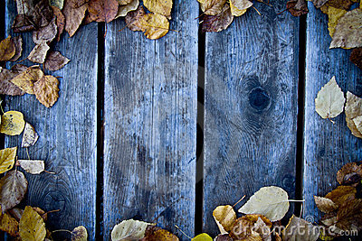 Fall wood background