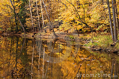 Fall Woods Water Scene