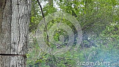 Falla av det klippta trädet arkivfilmer