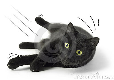 Fallen Cat