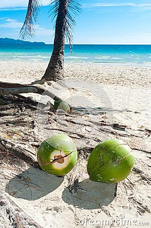 Fallen coconuts