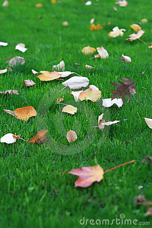 Fallen Leaves on Grass