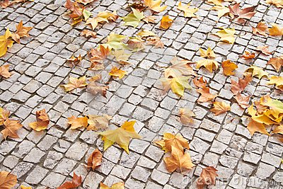Fallen Leaves on Paver Brick