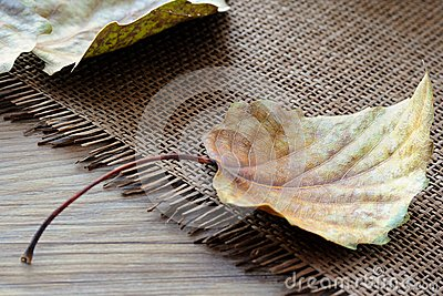 Fallen Leaves of Poplar Tree