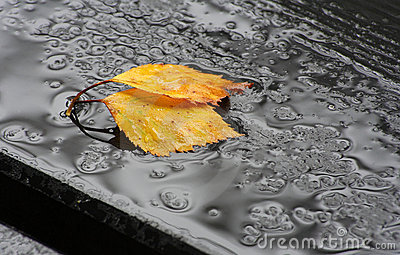 Fallen leaves in the rain
