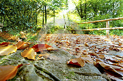 Fallen leaves and sun rays