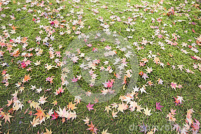 Fallen Maple Tree Leaves on Field of Moss