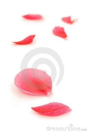 Free Fallen Petals Royalty Free Stock Image - 1664856