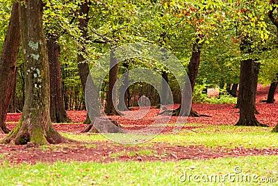 Fallen red foliage