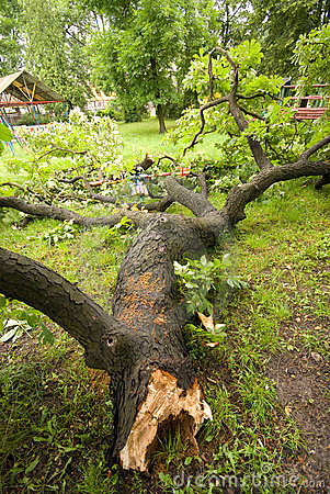 Free Fallen Tree After Storm Royalty Free Stock Photos - 10183058