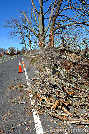 Fallen tree branch on a Road after a Strong Storm