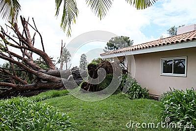 Fallen Tree in Fullerton 3 Editorial Stock Photo