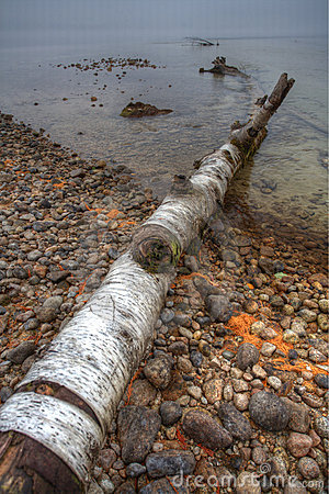 Fallen tree on shoreline.