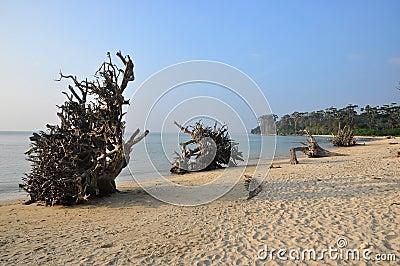 Fallen trees in beach