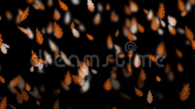 Fallende braune Eichenblätter des Herbstes Fall-Wetter Wind und trocknen Blätter stock video footage