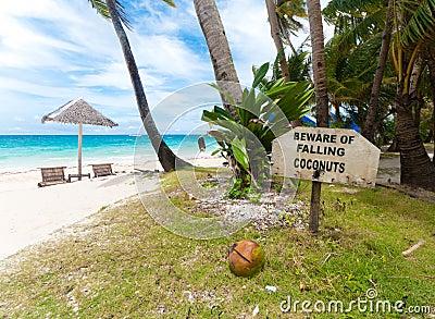 Fallende Kokosnüsse