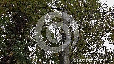Falletto aperto rotto di collegamento di fili elettrici e linee di telecomunicazione video d archivio