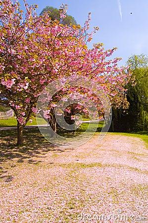 Falling blossom