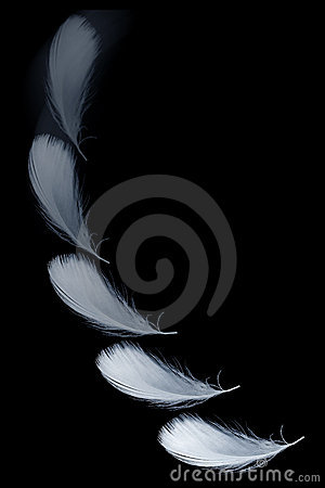 Free Falling Feather Stock Photography - 3779572
