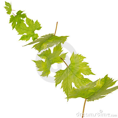 Falling green leaves