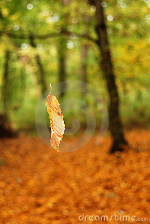 Falling leaf in forest
