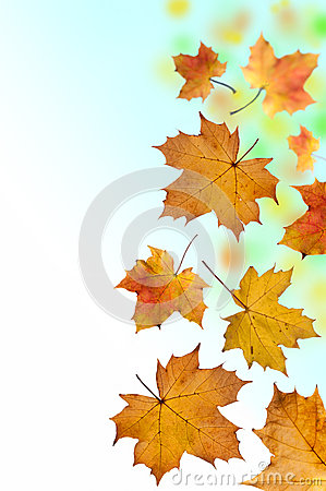 Free Falling Leaves Royalty Free Stock Photography - 27443877