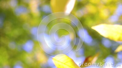 Falling leaves in autumn park with colorful trees as defocus background stock video