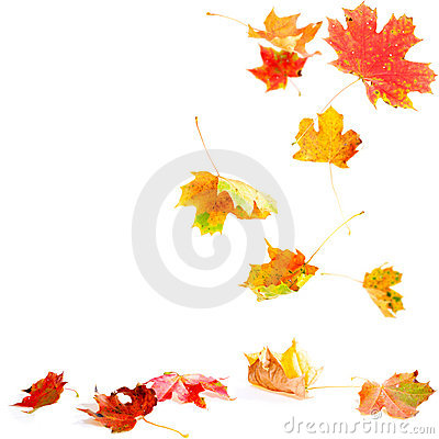 Free Falling Maple Leaves Stock Photography - 11038192