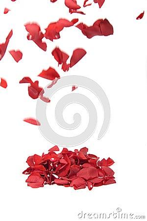Free Falling Rose Petals Royalty Free Stock Photos - 13833528