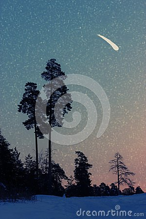 Free Falling Stars In The Forest Royalty Free Stock Images - 100447959
