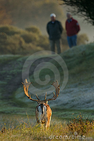 Fallow deer and two men