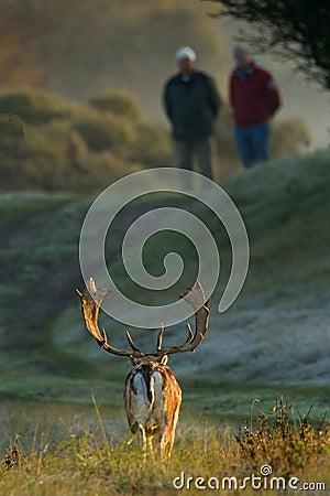 Fallow deer and two men