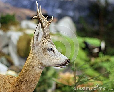 Fallow deer wild animals of the forest